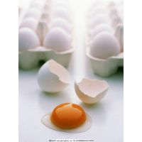 沈阳笨土鸡蛋
