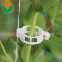 北京中荷创新温室材料专供西红柿栽培种植专用配件西红柿卡扣 塑料番茄卡扣