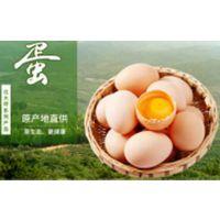 河南生态鸡蛋价格