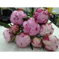 菏泽多禾芍药鲜切花 母亲节适用鲜花礼品批发