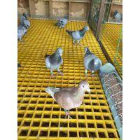 江西赣州恒佳 供应玻璃钢格栅养殖地网、机械格栅