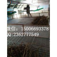 鸡鸭鹅漏粪地板的使用方法 雏鸡雏鸭漏粪地板规格