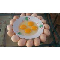 西安土鸡蛋供应