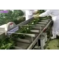 出售 蔬菜切根机 切段机 白菜切半机 冬瓜劈半机 厂家直销