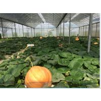 天津农业产业文化生态园温室智能调节、5万平方型全电脑控制
