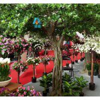 仿真椰子树|西安仿真椰子树制作|西安仿真树价格-金森造景