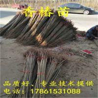 http://himg.china.cn/1/4_444_236862_800_800.jpg