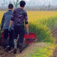 水稻玉米手推式收割机 密集种植作物收割割晒机 鼎达牌