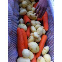 厂家供应 多功能去皮机 优质洗姜机果蔬加工设备 九盈去皮机