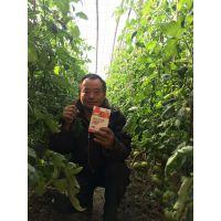 进口叶面肥进口冲施肥大棚瓜果蔬菜专用肥碧格-美国瀚森