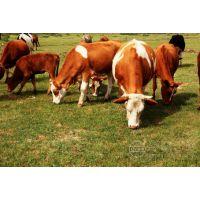 供应肉牛 饲料 预混料成分 养殖 专用添加剂硫酸钙 石膏粉 VD-05凯氏苏特牌