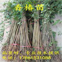 http://himg.china.cn/1/4_449_236356_800_800.jpg