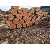 广东省东莞市进口铁杉批发厂家 进口木方批发厂家 工地方条批发厂家