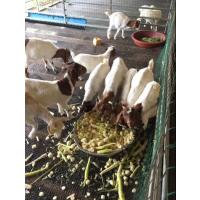 钢网羊床@防锈钢网羊床@钢网羊床图片@钢网羊床生产厂家
