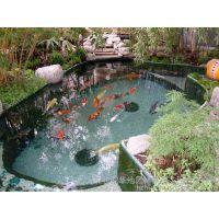 文成县南昌游泳池水处理游泳池浴池专用锅炉
