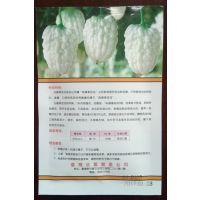 台湾苹果苦瓜种子总经销