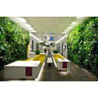 活体水培植物墙,适合哪些植物?千山素集来告诉你