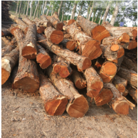 供应楝木红椿木榆木原木