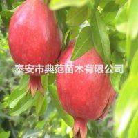 大红袍石榴苗 大红袍石榴苗价格 植株健壮成活率高