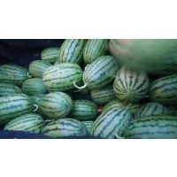 全美二凯西瓜种植基地