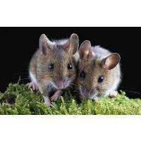 合肥灭老鼠方法合肥烨康杀虫