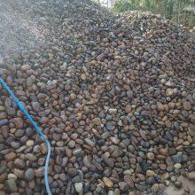 广东鹅卵石价格 河里石过滤料 污水处理石 鹅卵石污水处理价格 广东英德石