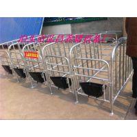 养猪设备世昌定位栏限位栏十个猪位带食槽