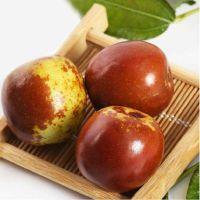 陕西绿之语大荔冬枣原产地新鲜直供大售卖4斤包邮