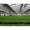 智能温室蔬菜大棚