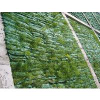 山东宏祥植生袋护坡园林工程绿化专用