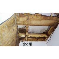 广州番禺灭鼠除四害根治室内老鼠多负责上门清理老鼠