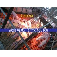 仔猪多少钱一斤,今日小猪价格是多少现在养猪怎么样
