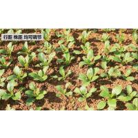 宏燊 蔬菜籽播种机 种子胡萝卜茼蒿大葱油菜菜心菠菜播种机