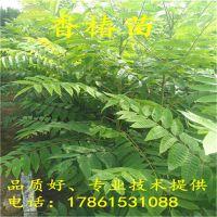 http://himg.china.cn/1/4_479_237110_800_800.jpg