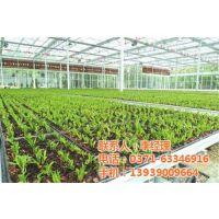 南阳温室生产_鼎鑫温室_蔬菜种植温室生产