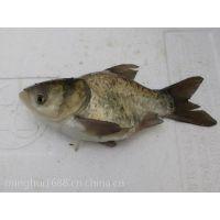 佛山塘角鱼繁殖基地 胡子鲶水产养殖