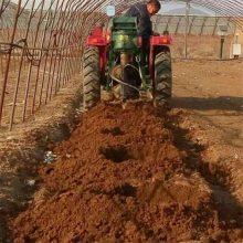 林园种苗挖坑机 桃苗植树机