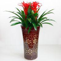 武汉绿植大型凤梨红鸿运当头红星盆栽,开业庆典送礼,可租摆,武汉送货上门