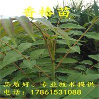 http://himg.china.cn/1/4_487_236616_800_800.jpg