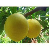 炎陵黄桃,又称高山黄桃,以香、脆、甜而闻名于世,为国家地理标志保护产品。生长于湖南省炎陵县平均海拔4