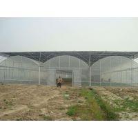 广西防城港草莓火龙果大棚温室连体、3米高、薄膜型2万平米建造价格