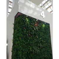 绿植墙立体绿化壁挂 上海绿帮园艺专业设计室内绿植墙 中小型l植物 别墅庭院 园林景观设计及养护
