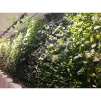 承包生态阳光房、真植物墙、数控水帘