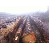 尚高木业供应欧洲云杉原木直径50-80CM