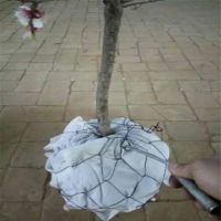 树根种植网,保护土球网,包土球勾花网