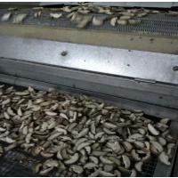 速冻鱼虾网带输送机 速冻网链隧道 厂家专业定制