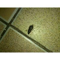 卫生间有蟑螂的原因