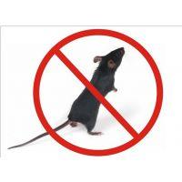 沧州清波家庭专业灭鼠,灭蟑螂,除虫除蚁效果明显