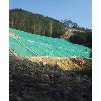 三水园林供应重庆草种水利水电林业矿区复绿灌木种子批发