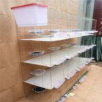 广式鸽子笼 肉鸽养殖笼加粗大号厂家低价批发